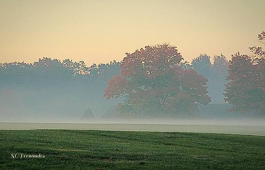 As the Fog Lifts by Stacie Fernandes