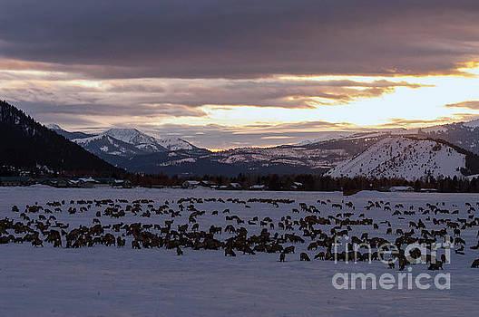 Bob Phillips - As the Sun Sets over Elk Reservation
