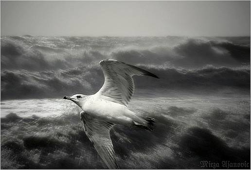 Ascending Through Storm by Mirza Ajanovic