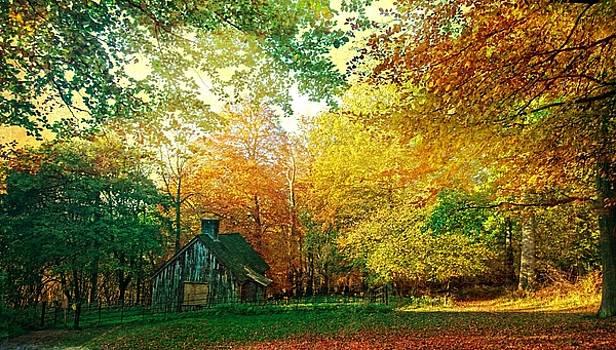 Ashridge Autumn by Anne Kotan