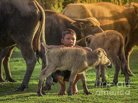 Asian children and buffalo at countryside. by Tosporn Preede