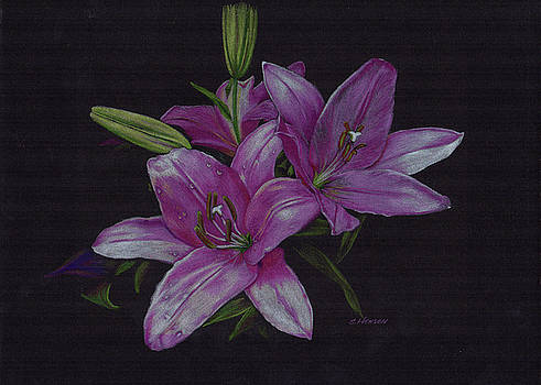 Asian Lillies by Sue Henson