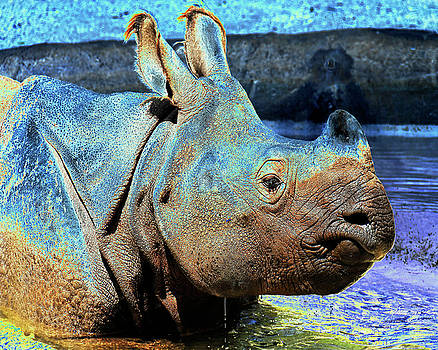 Asian Rhino 1 by Steven Howes