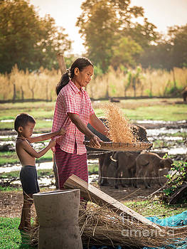 Asian women winnow rice rice separate between rice and rice chaf by Tosporn Preede