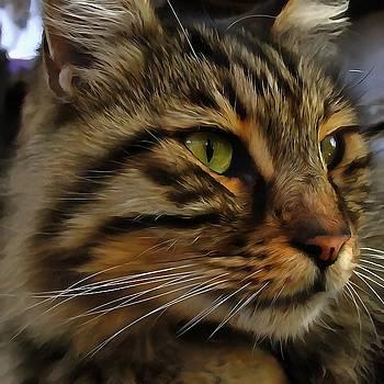 Tracey Harrington-Simpson - Aslan The Long Haired Tabby Cat