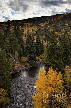 Aspen and Creek by Timothy Johnson