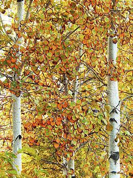 Aspen Autumn Glory by Ann Johndro-Collins