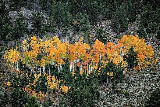 Aspen Color by Juli Ellen