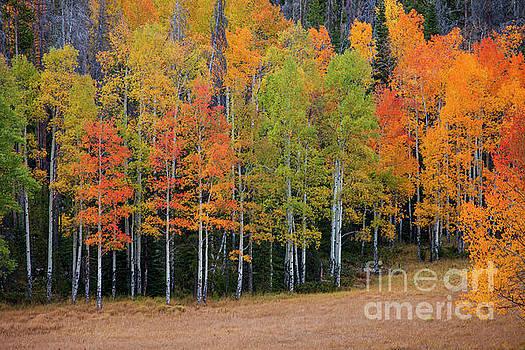 Aspen Color by Timothy Johnson