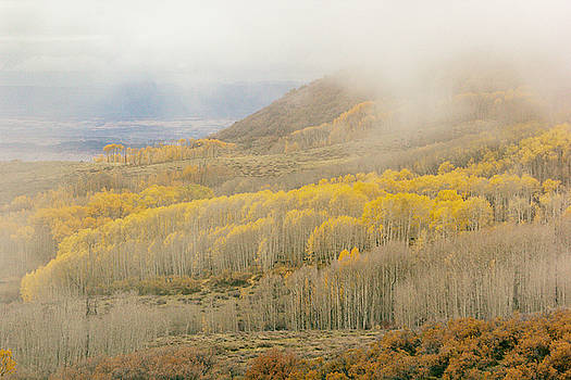 Aspen Covered Hillside by Peter J Sucy