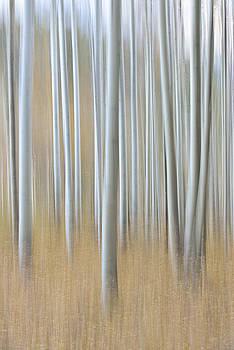 Aspen Dream by Claudio Bacinello