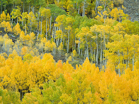 Aspen Dream by Justin Lowery