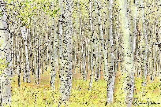 Steve Ohlsen - Aspen Forest 2 - Signed Limited Edition