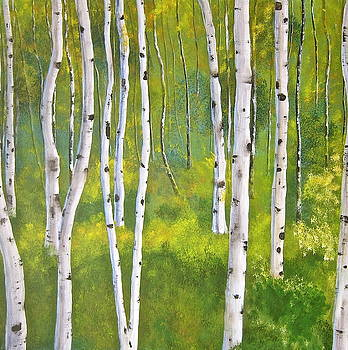 Aspen forest by Heather Matthews