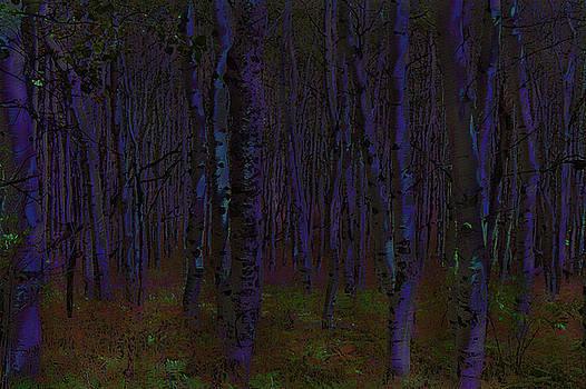Steve Ohlsen - Aspen Forest Night Shade - Photo Painting