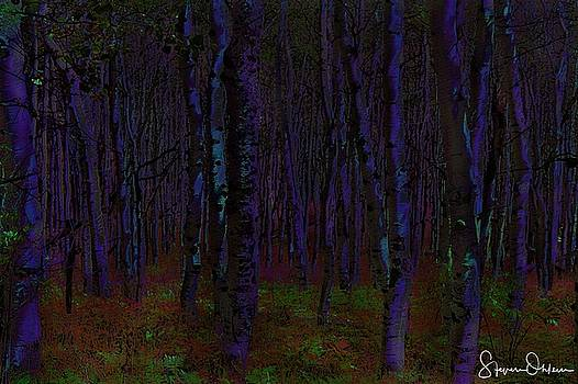 Steve Ohlsen - Aspen Forest Night Shade - Signed Limited Edition