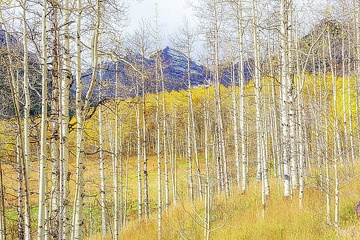 Aspen Glow by Eric Glaser