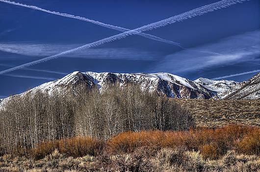 Aspen Grove by Scott Harris