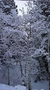Aspen in Snow by Diamond Jade