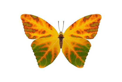 Aspen Leaf Butterfly 1 by Agustin Goba