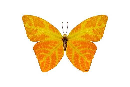 Aspen Leaf Butterfly 3 by Agustin Goba