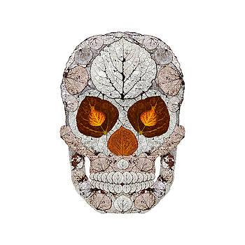 Aspen Leaf Skull 11 by Agustin Goba