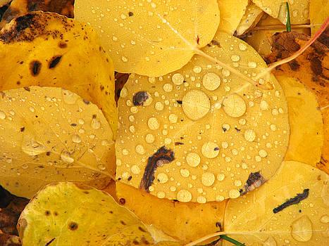 Aspen Leaves by David Kocherhans