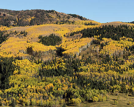 Aspen Leaves, Rio Arriba County, NM by Troy Montemayor