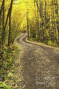 Aspen Road in Yellow by Tibor Vari