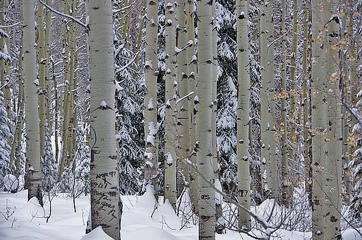 Aspen Snow by Matt Helm