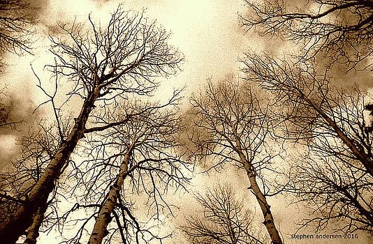Aspen by Stephen Andersen