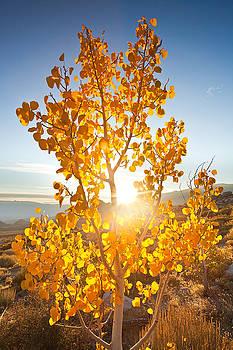 Aspen Sun by Nolan Nitschke