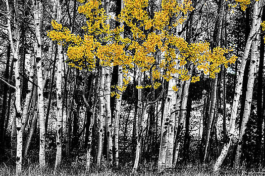 Aspen Touch of Orange by James BO Insogna
