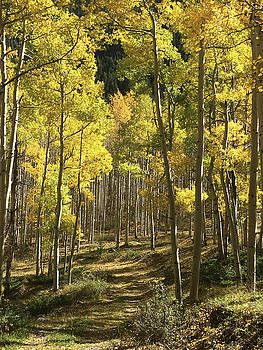 Aspen Trail by Carol Milisen