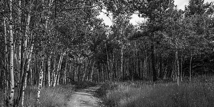 Aspen Trail In Black And White by Michael Putthoff