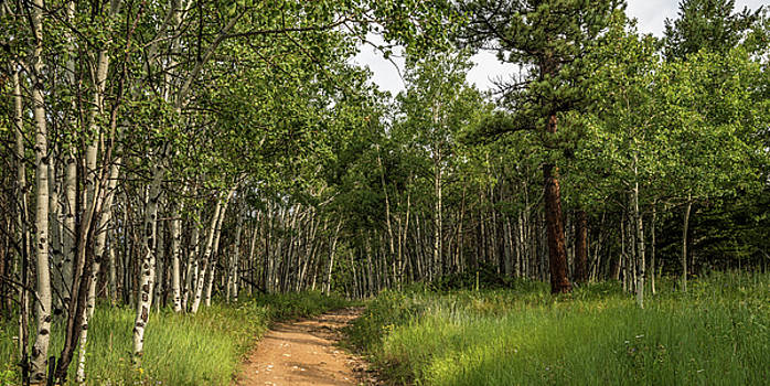Aspen Trail by Michael Putthoff