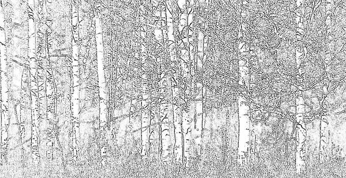 Aspen Tree Wallpaper by Charlotte Schafer