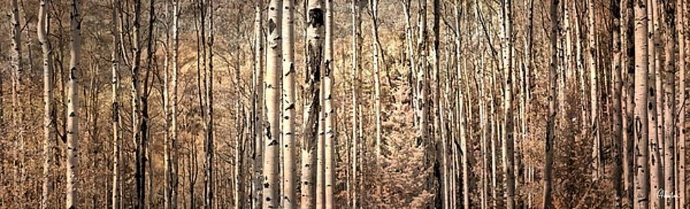 Aspen Trees in Infrared by Christine Hauber
