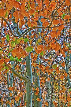 Mae Wertz - Aspen Trees