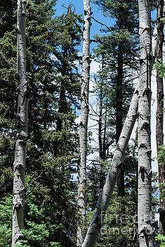 Billy Moore - Aspen Vertical 1