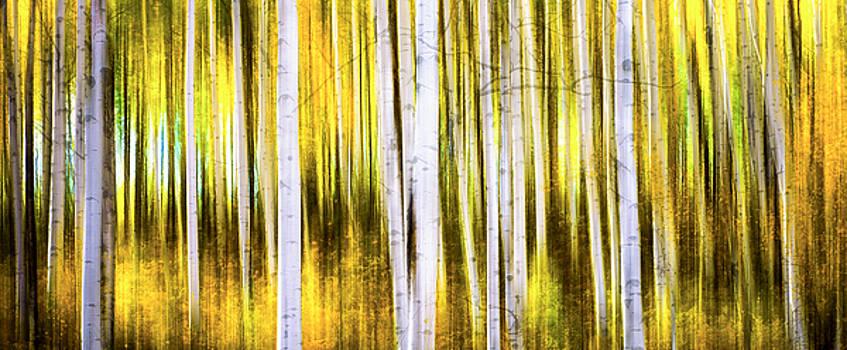 Aspen Wonderland by Bjorn Burton