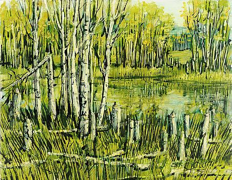 Aspens and Beaver Pond by Steve Spencer