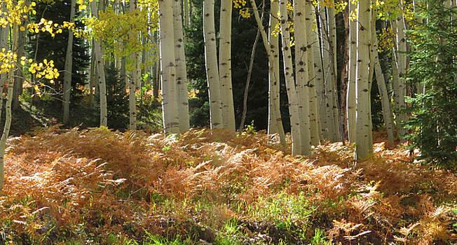 Aspens and Ferns by Carol Milisen