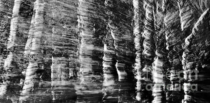 Aspens Black White by Glennis Siverson