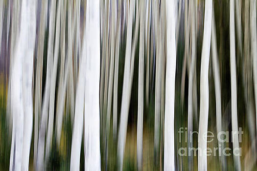 Aspens in an abstract key  by Bryan Keil