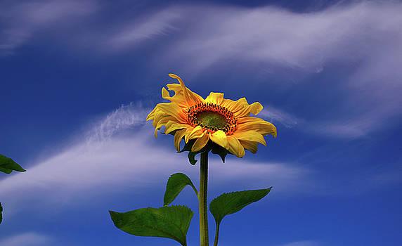 Aspiring to the sun by Yuri Hope