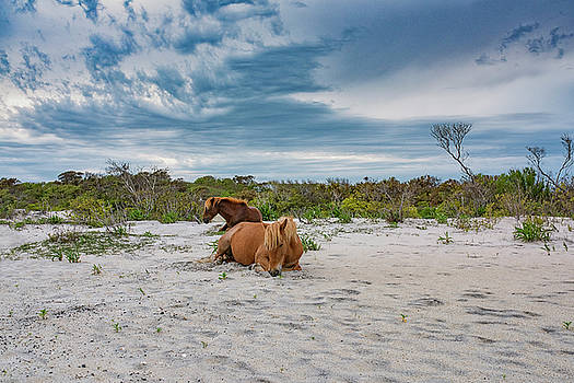 Assateague Horses by Dennis Clark