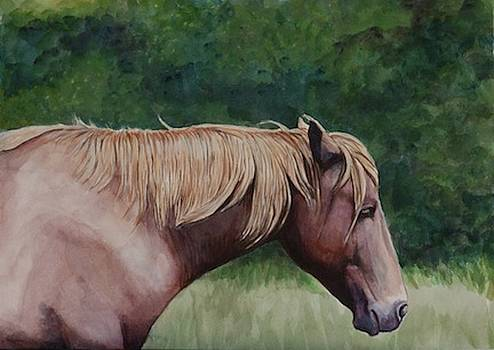 Assateague Island Pony by Charlotte Yealey