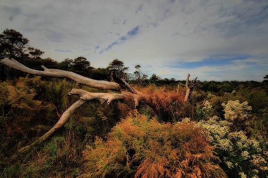 Assateague Outback by Robert McCubbin