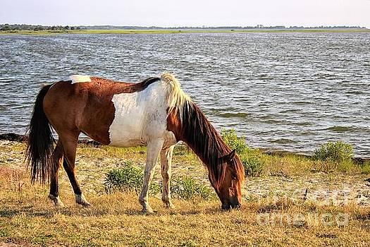 Paulette Thomas - Assateague Pony - Print One